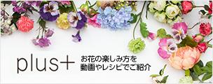 Plus+ お花の楽しみ方を動画やレシピでご紹介